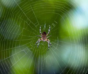 Araknofobi er angst for edderkopper