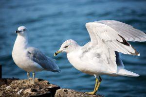 Fuglefobi kan fjernes med hypnose